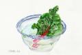 ガラス鉢の緑菜