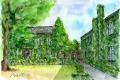 蔦のからまる学舎